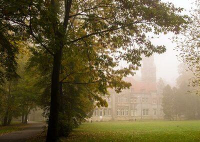 Z lewej strony drzewo, za nim we mgle widać pałac w Nakle Śląskim.